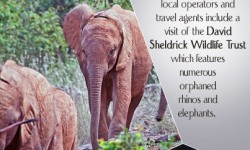 Best Tour Options for Travellers Visiting Nairobi