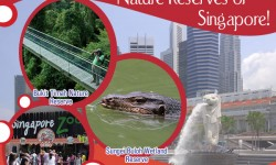 Bountiful Grace in Nature Reserves of Singapore