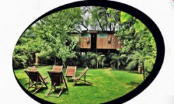 A Look at Best Tree House Hotels in India