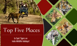 Top Five Places to Spot Tigers on India Wildlife Holidays