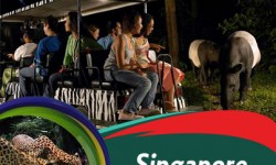 Singapore Night Safari – A Quick Guide for Holidaymakers