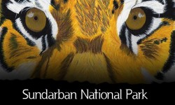 Sundarban National Park - Travel Guide for Foreign Travellers