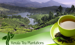 Kerala Tea Plantations – A Must Visit for all Nature Lovers on India Holidays