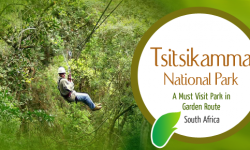 Tsitsikamma National Park – A Must Visit Park in Garden Route, South Africa