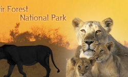 All about the Grandeur of Gir Forest National Park, Gujarat, India