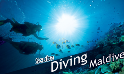 Scuba Diving Tips for the Beginners Who Are Booking Air Tickets to Maldives