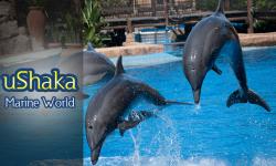 A Quick Peek into uShaka Marine World, the Largest Marine Theme Park of Africa