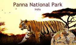Wildlife and Other Attractions of Panna National Park, India