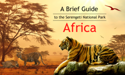 A Brief Guide to the Serengeti National Park, Africa: Accommodation, the Great Migration, and General Tips