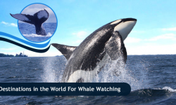 Five Top Destinations in the World for Whale Watching Enthusiasts