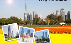 Top 3 Parks to Visit on Your Trip to Dubai