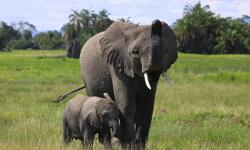 Highlights of a Wildlife Excursion to Nairobi