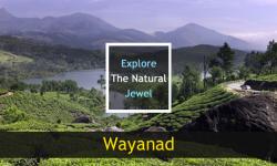 Explore the Natural Jewel: Wayanad