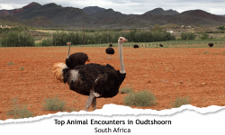 Top Three Animal Encounters in Oudtshoorn, South Africa