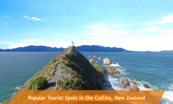 Three Popular Tourist Spots in the Catlins
