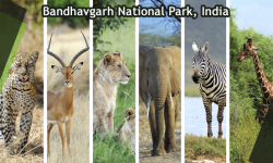Quick Guide: Bandhavgarh National Park, India