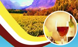 Top 5 Wine Estates in Cape Town, South Africa