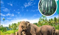 Malaysia's Best Eco-Tourism Destinations for Nature Lovers