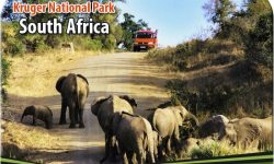 Kruger National Park – Your Perfect Date with Nature and Wildlife