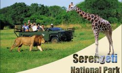 Here's all You Need to Know about the Serengeti National Park