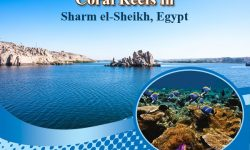 The 5 Not-to-be-Missed Coral Reefs in Sharm el-Sheikh, Egypt