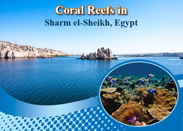 Coral-Reefs-in-Sharm-el-Sheikh-Egypt