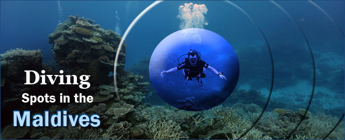 Diving-Spots-in-the-Maldives