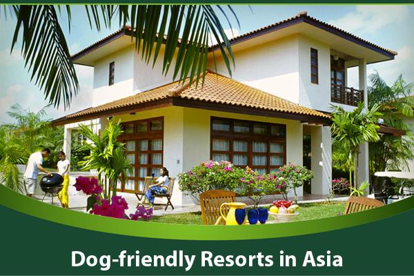 dog-friendly-resorts-in-Asia