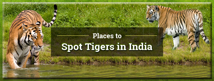 Places-to-Spot-Tigers-in-India