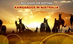 Best Places for Spotting Kangaroos in Australia