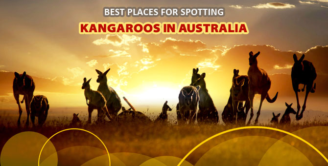 Best-Places-for-Spotting-Kangaroos-in-Australia
