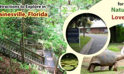 Top Attractions to Explore in Gainesville, Florida for Nature Lovers