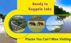 Kandy to Koggala Lake – Places You Can't Miss Visiting in Sri Lanka