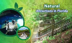 5 of the Top Natural Attractions in Florida