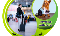 Travelling With Pets? All you need To Know!