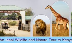 An Ideal Wildlife and Nature Tour to Kenya
